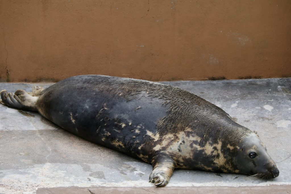 A Day Out at the Cornish Seal Sanctuary